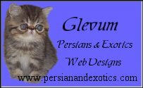 Glevum Persians & Exotics and Web Designs