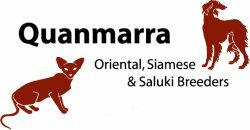 Quanmarra Siamese & Oriental Cats and Saluki Dogs